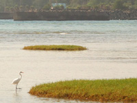 奄美大島の大瀬海岸/宇宿農村公園/サイクリングロード - 実際に野鳥を見たときは驚いた!