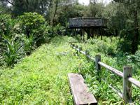 奄美大島の大瀬海岸/宇宿農村公園/サイクリングロード - 様々な野鳥が来るらしいがあとは運次第