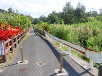 奄美大島の大瀬海岸/宇宿農村公園/サイクリングロード - 空港のかなり近くまで行けます!