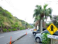 奄美大島のケンムン村 - 道路の標識にもケンムン?