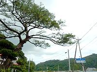 奄美大島の西郷松/西郷翁上陸之地