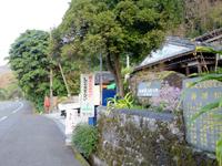 奄美大島の西郷松/西郷翁上陸之地 - この大木が西郷松らしい