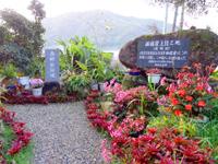 奄美大島の西郷松/西郷翁上陸之地 - 上陸の碑もあります