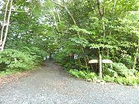 奄美大島の金作原原生林への道 - ここから先が原生林?