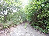 奄美大島の金作原原生林への道 - 原生林へと続く道