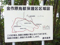 奄美大島の金作原原生林への道 - 金作原原生林マップ