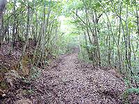 奄美大島の金作原原生林の奥 - 車やバイクでは入れない道
