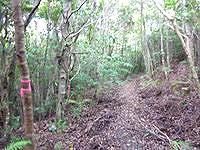奄美大島の金作原原生林の奥 - 登山用のマーキングが有り