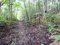 奄美大島の金作原原生林の奥 - かなりうっそうとしています