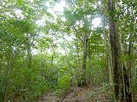 奄美大島の金作原原生林の奥 - どうやら登山道のようです