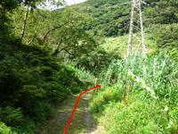 奄美大島のタンギョの滝入口 - 神屋バス停が目印