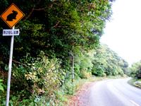 奄美大島の奄美大島の国道58号線/網野子峠/クロウサギに注意 - 標識もクロウサギバージョン