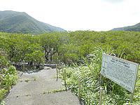 奄美大島のマングローブ原生林/ヒルギ群生地 - 湿地帯へ降りる場所もあり