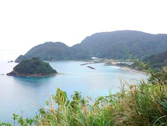 奄美大島の市海岸「マングローブ原生林側から」