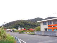 奄美大島の市海岸 - 同じ湾だけあってマングローブもあります
