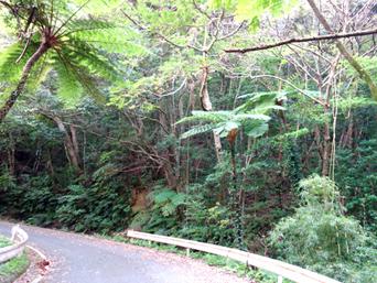 奄美大島の林道 嘉徳青久線