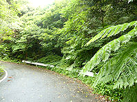 奄美大島の林道 嘉徳青久線 - 金作原に匹敵する密林かも?