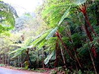 奄美大島の林道 嘉徳青久線 - 展望台?らしく場所もあったけど・・・