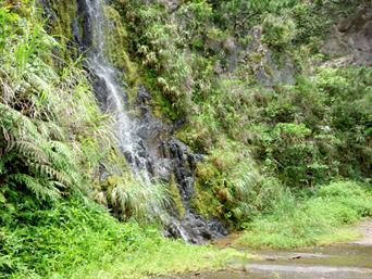 嘉徳青久線の滝