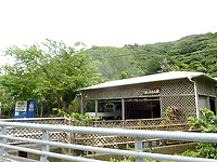 奄美大島の藍染め よしかわ工房