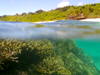 上地島北岸の珊瑚礁