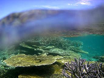 新城島の幻の島の珊瑚礁「こんなアングルも普通のデジカメで撮れるかも?」