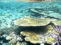 新城島の幻の島の珊瑚礁の写真