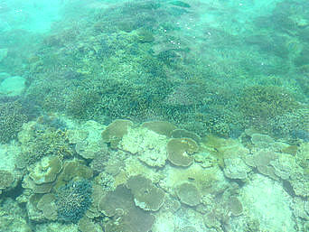 上地島の港脇の海