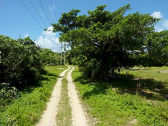 南の浜への道/下地島側への道