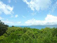 新城島のタカニクの写真