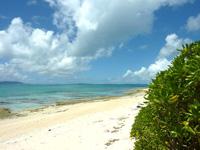 上地島北岸の海/干潮時の珊瑚礁