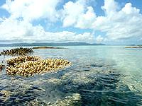 新城島の上地島北岸の海/干潮時の珊瑚礁 - 大潮などだと生き生きしたサンゴが覗かせます