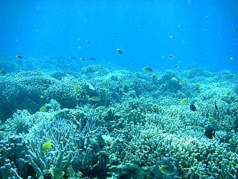 バラスのバラス海の中「珊瑚礁と魚のコラボレーション」