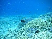 バラス海の中