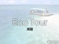 八重山列島 バラスの海猫の写真