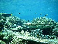 バラスのバラス珊瑚 - サンゴの種類は様々