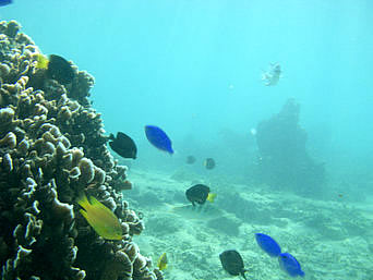 真栄田岬ビーチ・インリーフの海の中