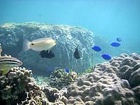 中部の真栄田岬ビーチ インリーフの海の中 - 魚の数は意外と多いです