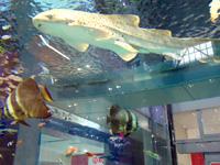 中部のイオンモール沖縄ライカム - 美ら海水族館監修の水槽