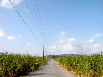 久米奥武島の奥武の道