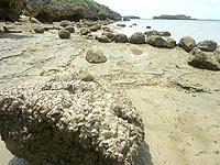 オーハ島のオーハ島北岸の写真