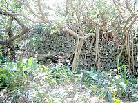 波照間島の下田原城跡/ぶりぶち公園 - 城の石垣が奥にはあります