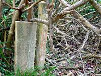 波照間島の浜シタン群落 - 石碑は完全に森の中に埋もれています