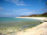 波照間島の浜シタン群落 - ペー浜がキレイに見れます