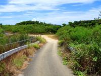 波照間島の浜シタン群落 - ここがペー浜と群落の入口
