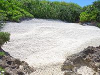 波照間島の毛ビーチ/珊瑚の殻ビーチ/サンゴの浜 - 小さなビーチには珊瑚の殻がびっしり