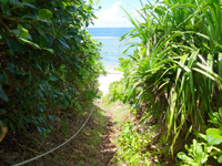 波照間島のペムチ浜/ベムチ浜 - ビーチ入口はここ!最近はロープも設置