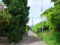 鳩間島の島のメインロード
