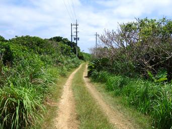 鳩間島の島の北へ抜ける道「港から島仲へ抜ける道です」