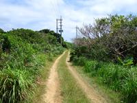 鳩間島の島の北へ抜ける道